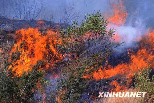云南大理一风景区森林起火三日尚未完全扑灭