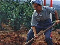 江青骑马上山视察大寨 做农活饶有兴致