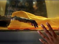 北京神秘干尸首次展出 龙袍裹身头发完好[组图]