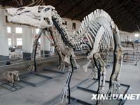 探访山东诸城世界最大规模恐龙化石埋藏地[图集]