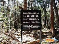 探秘日本人的自杀圣地[图集]