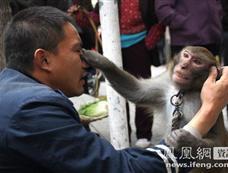 """湖北""""人猴互虐"""" 猴子打起""""跆拳道""""[图集]"""