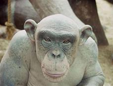 最丑陋秃毛动物:基因缺陷致眼镜熊变裸体熊[图集]