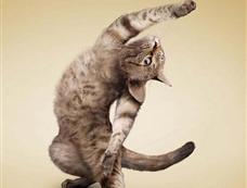 摄影师拍摄一系列猫做瑜伽照片[图集]