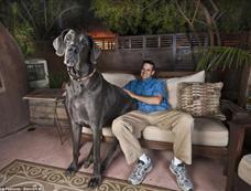 """世界最高狗""""个头""""惊人[图集]"""