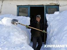新疆塔城、阿勒泰地区发生雪灾[图集]