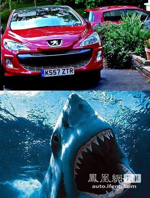 汽车世界的动物脸谱