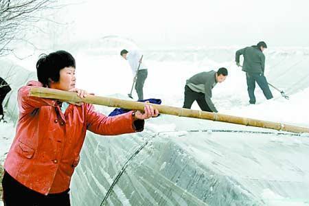 暴雪致河南149万人受灾 直接经济损失9.63亿