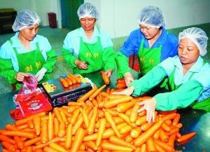 确保供港蔬菜安全卫生