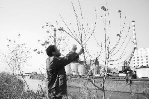 江苏大丰市南新村工业污染严重将整体搬迁(图)