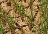 农产品期货围绕灾情博弈