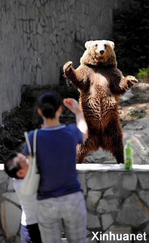 贵阳森林野生动物园:吸引游客的棕熊
