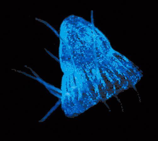 盘点会发荧光的海洋动物