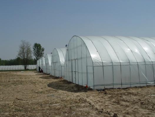 大棚的设计结构是按照荷兰瑞克斯旺种子公司示范大棚的标准建的,远远