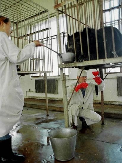 亚洲动物基金:活熊取胆行业没有改变