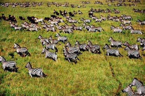 见证非洲动物大迁徙 众信旅游推暑期非洲亲子游